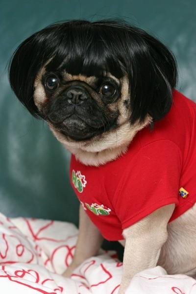 zdjęcia psów - śmieszne i słodkie