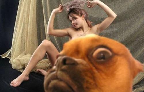 śmieszne zdjęcia psów