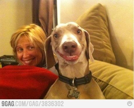 zdjęcia psów - śmieszne